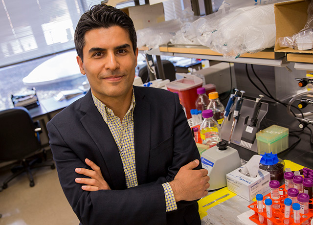 Assistant Professor Mehdi Nikkhah's vision of a microengineered chip to better understand heart attacks is being rewarded by the National Science Foundation with a CAREER Award totaling $500,000 over the next five years.