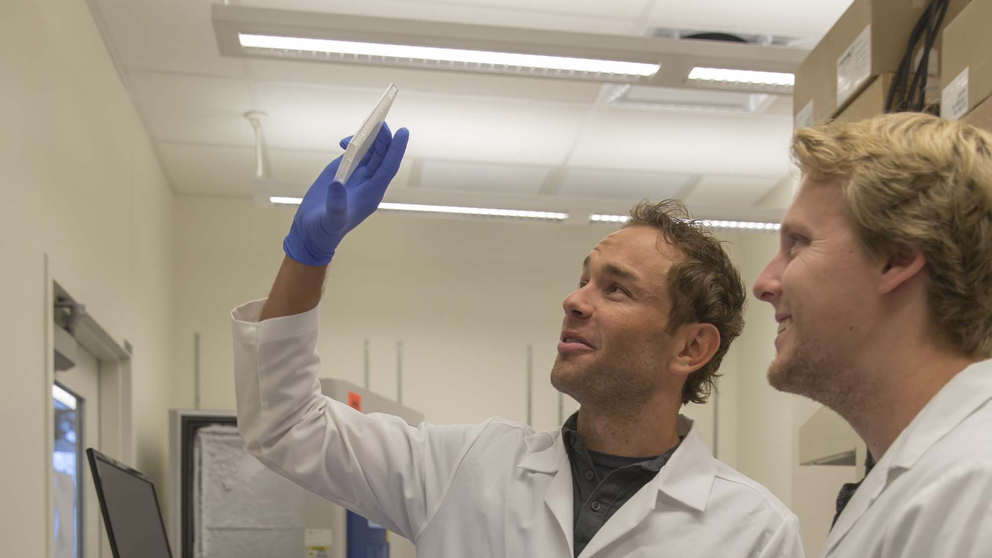 David Brafman (left) and Nick Brookhouser examining a plate used in an assay to characterize the identity of the hiPSC-derived neurons used in their research.