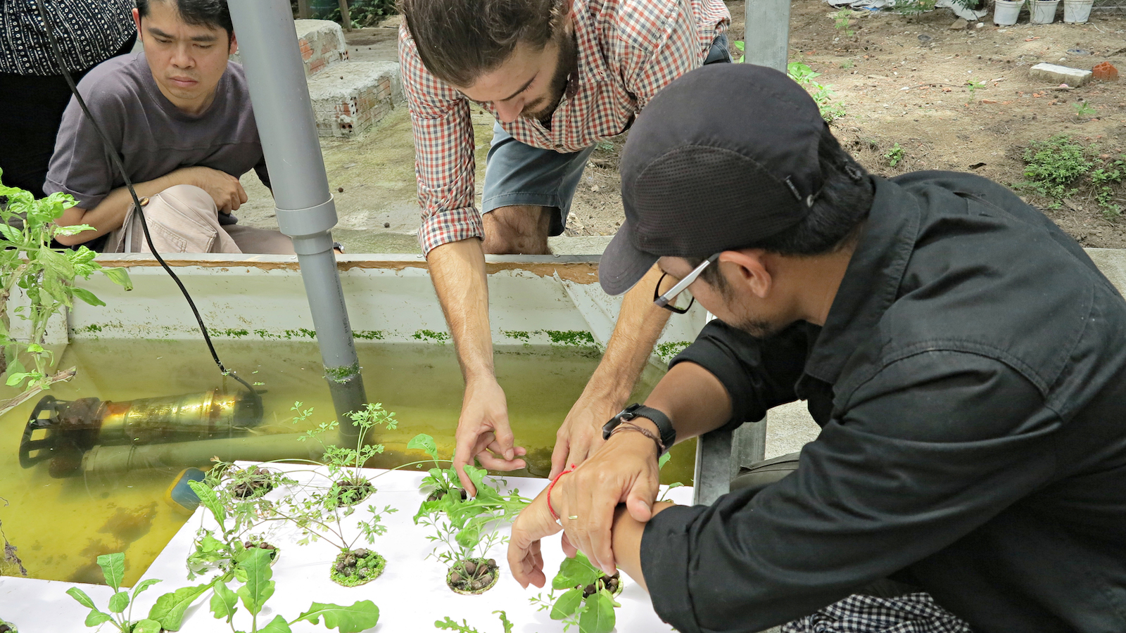 A group of young Asian scientists gather around a container where many plants have been planted and are growing in rows