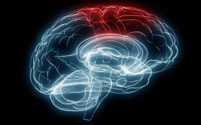 Brain injury research explores sex-dependent therapeutics