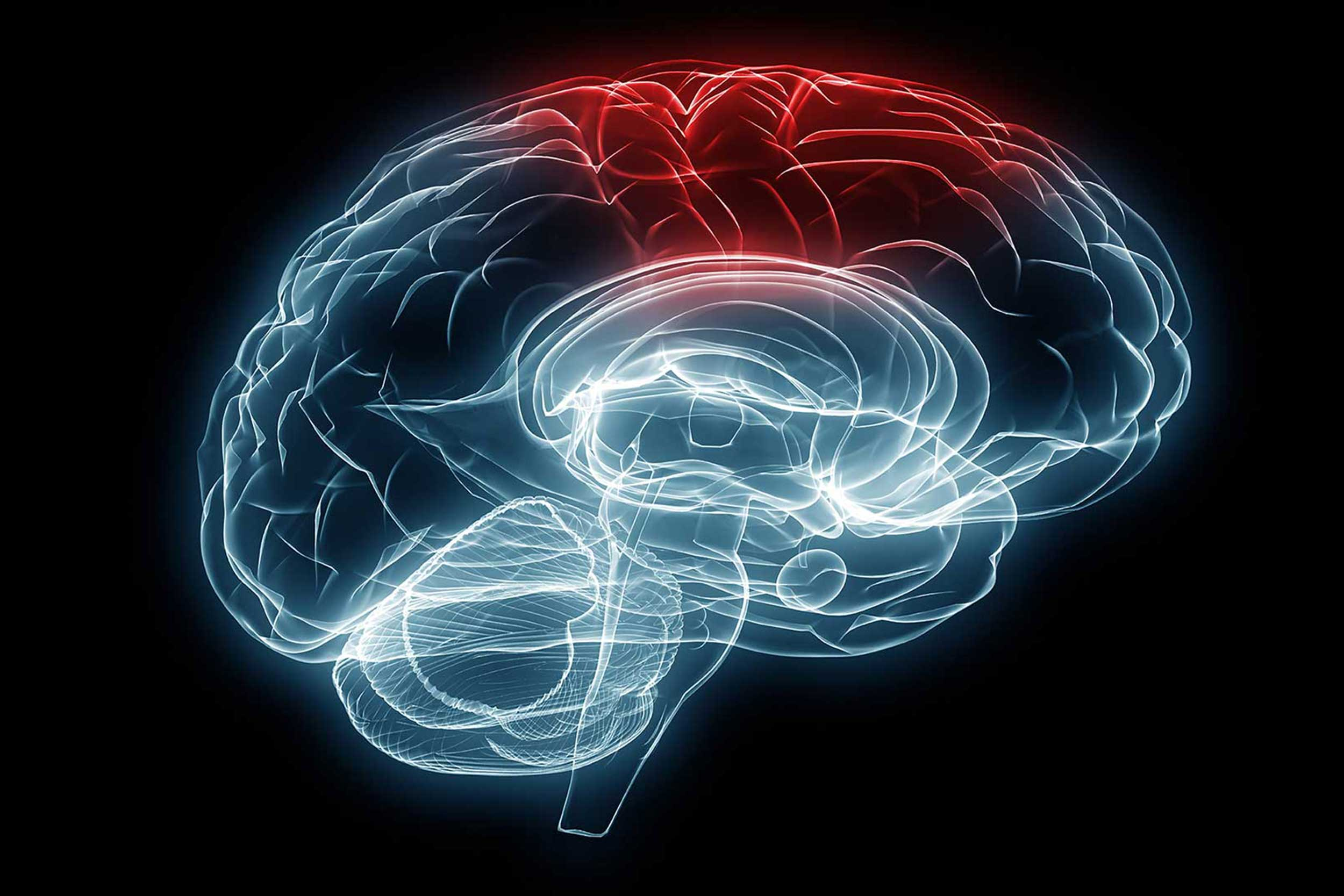 Stylized outline graphic of a human brain