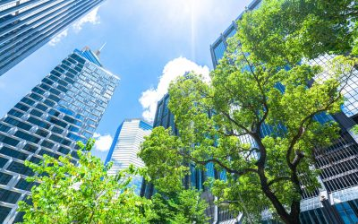 Do trees provide the best shade for urban environments?